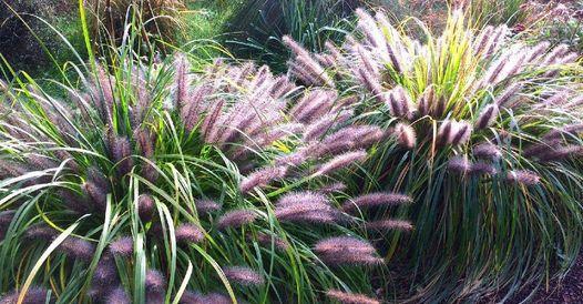Mon jardin ty Ker paysage/environnement est une en…