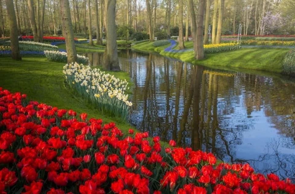Le plus beau jardin de tulipes au monde Keukenhof …